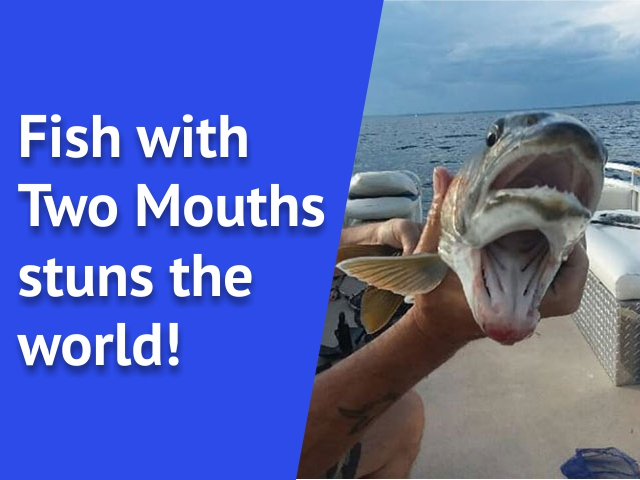 Fish with Two Mouths stuns the world!